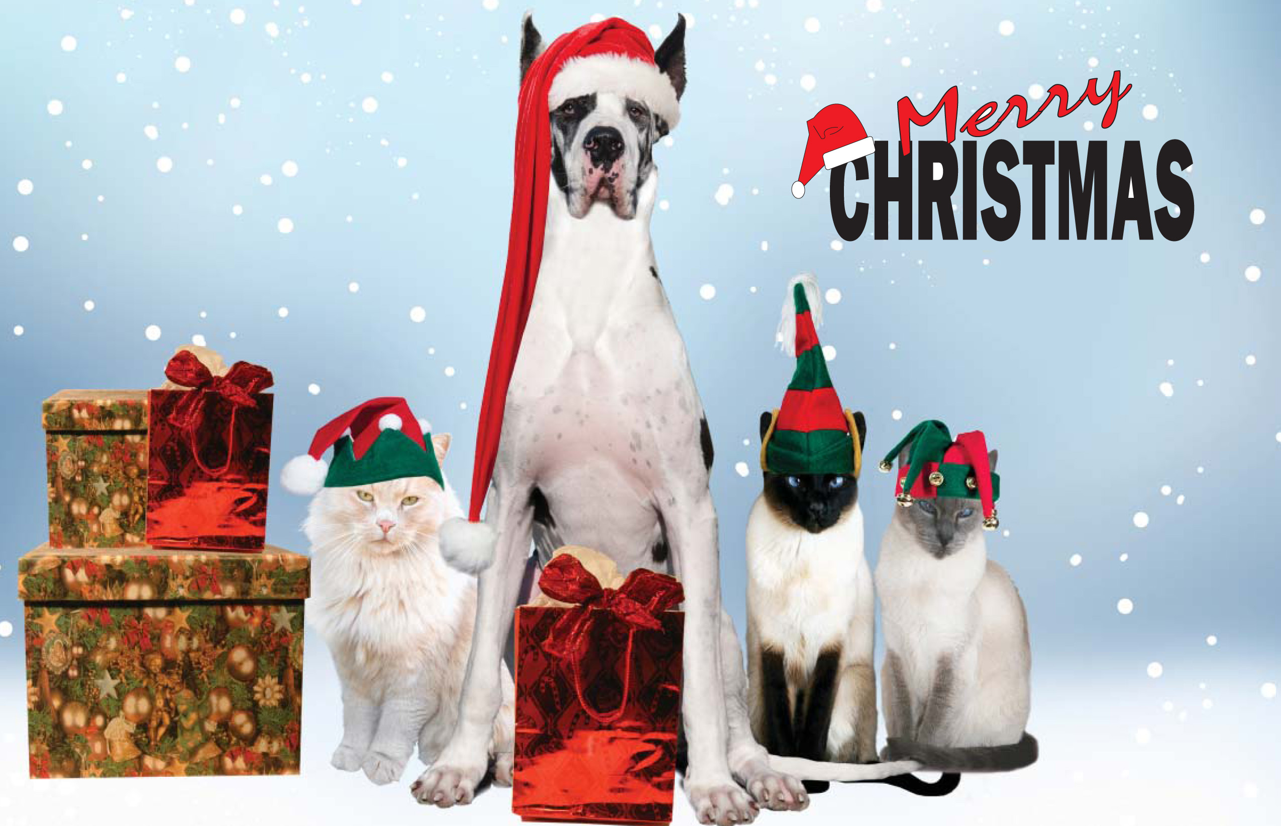 merry christmas images with animals let us send your holiday cards this year meals wheels of tarrant county blog